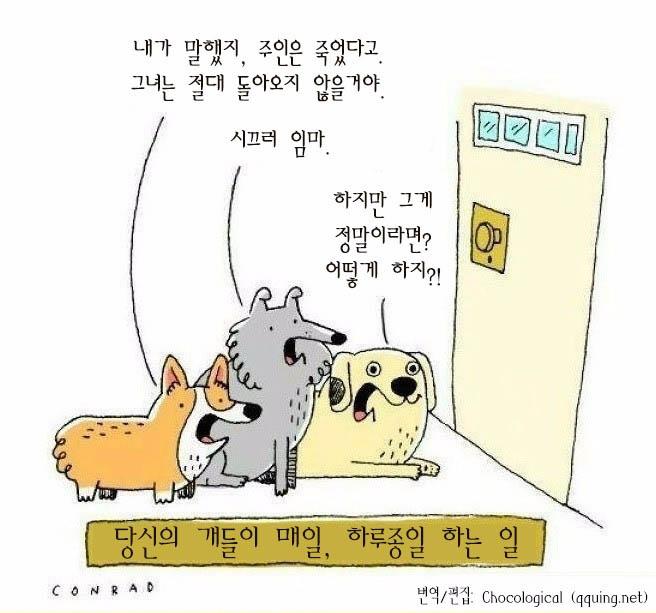 당신의 개들이 매일 하루종일 하는 일.jpg